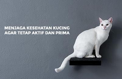 Menjaga kesehatan kucing agar tetap aktif dan prima
