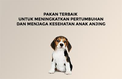 Pakan terbaik untuk meningkatkan pertumbuhan dan menjaga kesehatan anak anjing