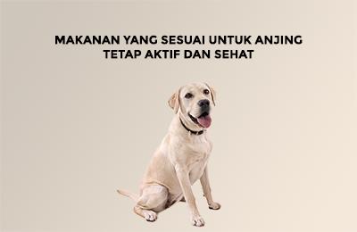 Makanan yang sesuai untuk anjing tetap aktif dan sehat